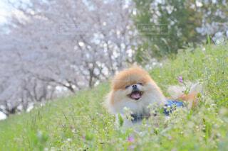 春はワクワクの写真・画像素材[4297887]