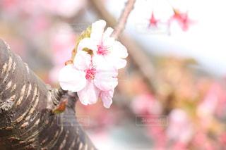 春 - No.370981