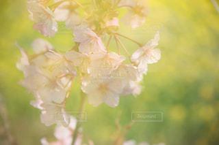 春の写真・画像素材[370983]