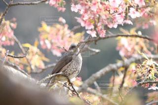 春,桜,鳥,菜の花,未来,卒業,卒業式,葉桜