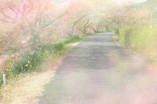 春,桜,道,未来,卒業,卒業式