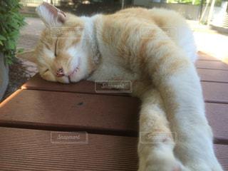 猫の写真・画像素材[242910]