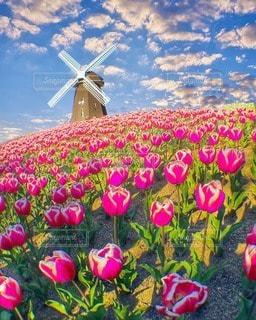 花の写真・画像素材[11233]