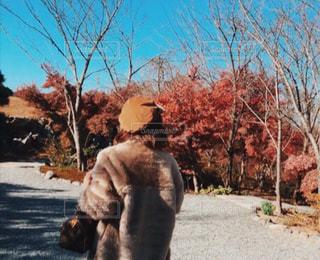 紅葉が綺麗な季節の写真・画像素材[875865]