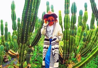 メキシコ感漂うサボテン畑の写真・画像素材[904236]