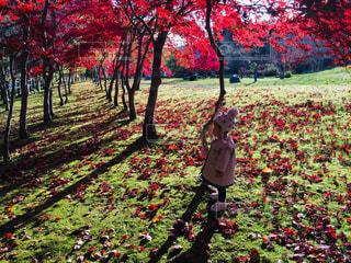 子ども,秋,紅葉,緑,赤,北海道,女の子,落ち葉,函館,紅葉狩り,午後の日差し,インスタ映え,ダム公園,新中野ダム,モミジ林