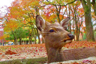 自然の写真・画像素材[244566]