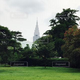風景,公園,芝生,屋外,東京,緑,樹木,梅雨,新宿御苑,草木