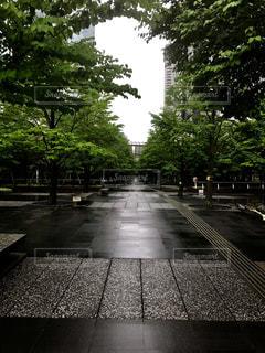 風景,雨,東京,道路,景色,樹木,都会,道,梅雨,品川