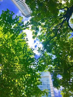 空,東京,緑,青空,都会,梅雨,品川,晴れ間,梅雨の晴れ間,都会の谷間