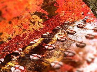 川辺の紅葉の写真・画像素材[873921]