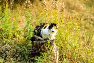 猫の写真・画像素材[244592]