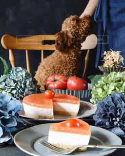 トマトのレアチーズケーキとトイプードルの写真・画像素材[3258759]