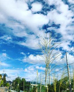 空,屋外,雲,青空,景色,秋空,すすき