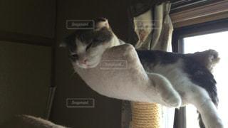 猫の写真・画像素材[244862]