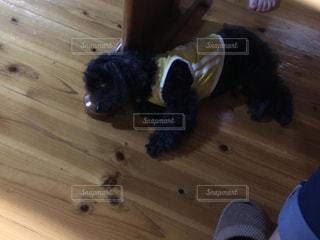 犬の写真・画像素材[244950]
