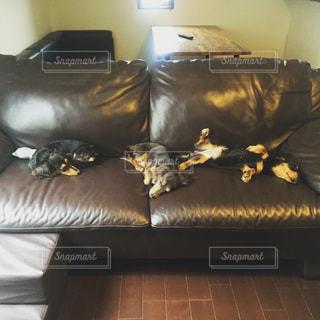 犬の写真・画像素材[242755]