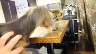猫の写真・画像素材[323841]
