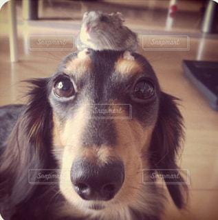 2人,ハムスター,ダックス,愛犬,ダックスフンド,ツーショット