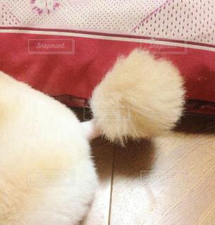 犬の写真・画像素材[283136]
