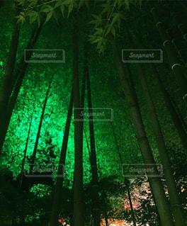 風景の写真・画像素材[246579]