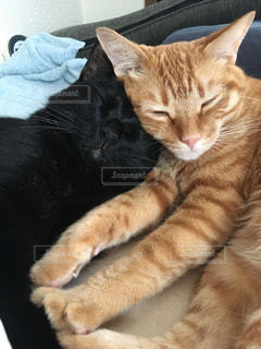 猫 - No.246625