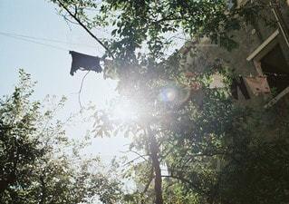 木の写真・画像素材[11163]