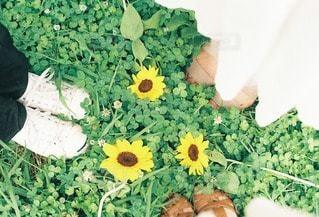 花の写真・画像素材[85958]