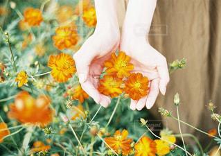 花の写真・画像素材[244494]