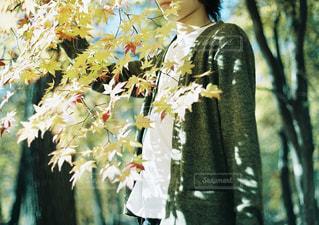 樹木 - No.244505