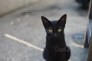 猫の写真・画像素材[296720]