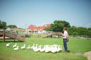 草の中に立っている人々 のグループの写真・画像素材[705445]