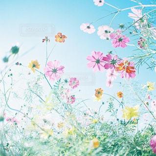 色とりどりの花のグループ - No.1108383