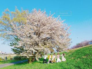 春,桜,人物,友達
