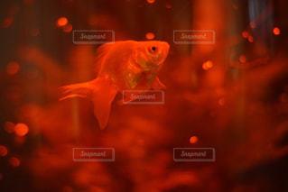 近くに魚のアップの写真・画像素材[1375592]
