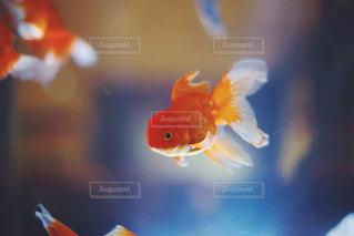 魚のぼやけた画像の写真・画像素材[1375623]