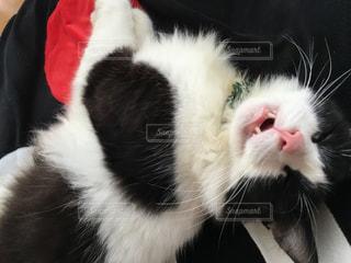 猫の写真・画像素材[247653]