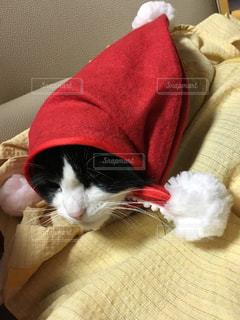 猫の写真・画像素材[247656]