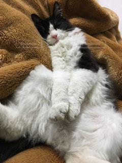 猫の写真・画像素材[247657]