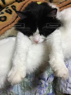 猫の写真・画像素材[247678]