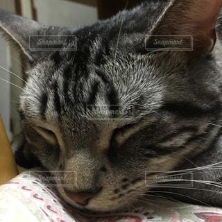 猫の写真・画像素材[247651]