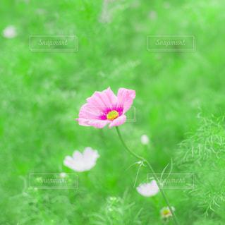 花の写真・画像素材[204699]