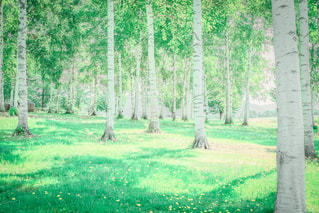 自然の写真・画像素材[473094]