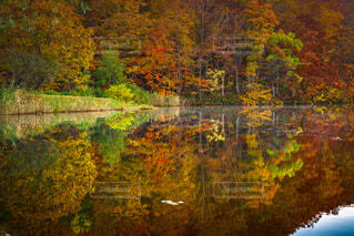 自然の写真・画像素材[840592]