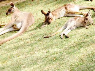 動物の写真・画像素材[249289]