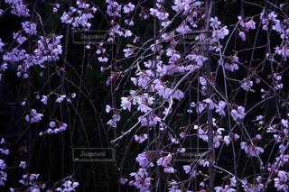 春の写真・画像素材[409664]