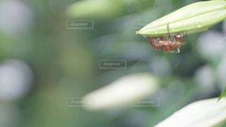 緑,虫取り,夏休み,セミ,蝉,オールドレンズ,脱け殻,諏訪旅,東京カメラガールズ,カメラガールズ,蝉の脱け殻