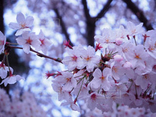春 - No.403098