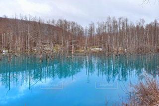 青い池 - No.882555