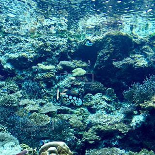 水玉の魚の写真・画像素材[1116055]